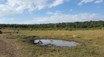Waterhole in Chobe National Game Park